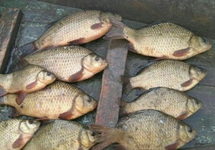 На Оскольском водохранилище задержали мужчину с краснокнижной рыбой
