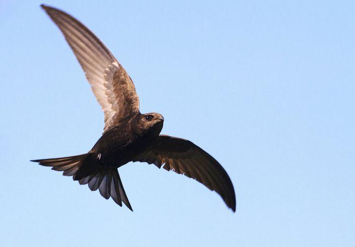 Ученые зарегистрировали новый птичий рекорд