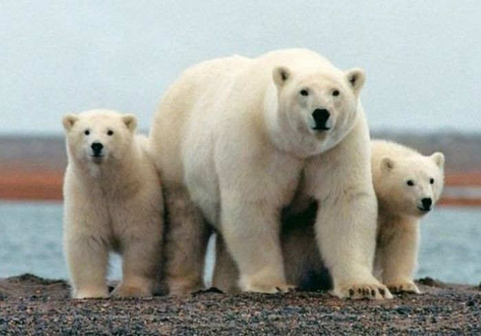 «Ошеломляюще!»: Арктику накрыла беспрецедентная жара