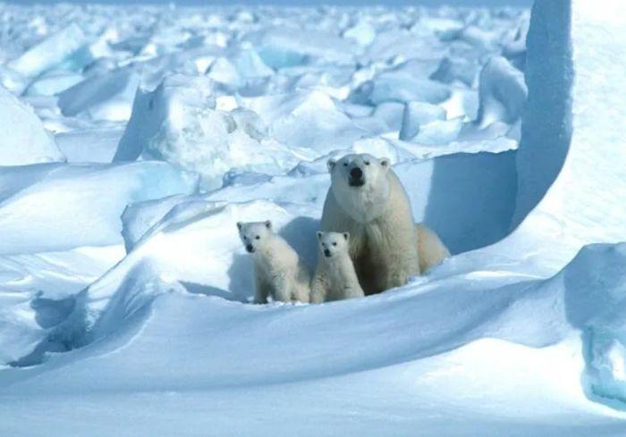Ученые заявили о неожиданно быстром таянии льда в Арктике
