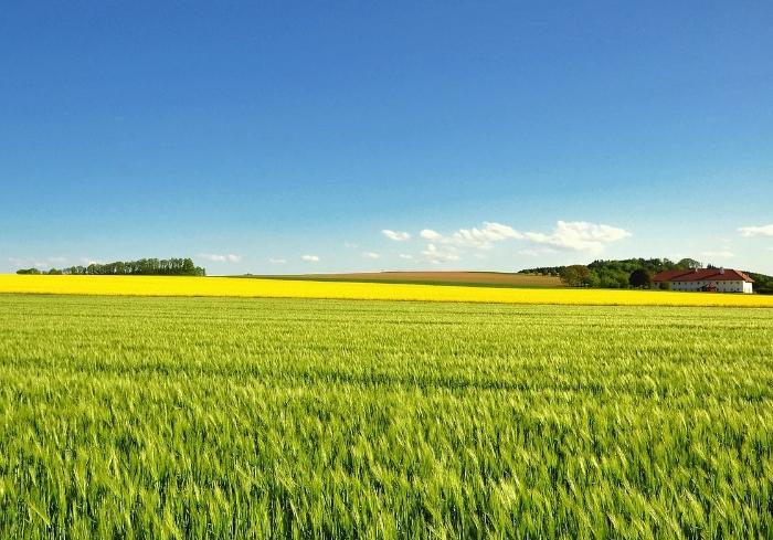 Харьковская область - среди лидеров по распродаже сельскохозяйственной земли
