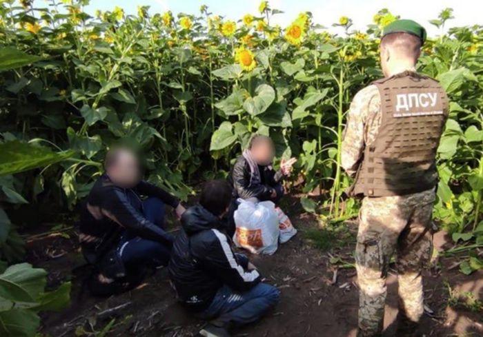 Под Харьковом в подсолнухах обнаружили «криминальных авторитетов» (фото)