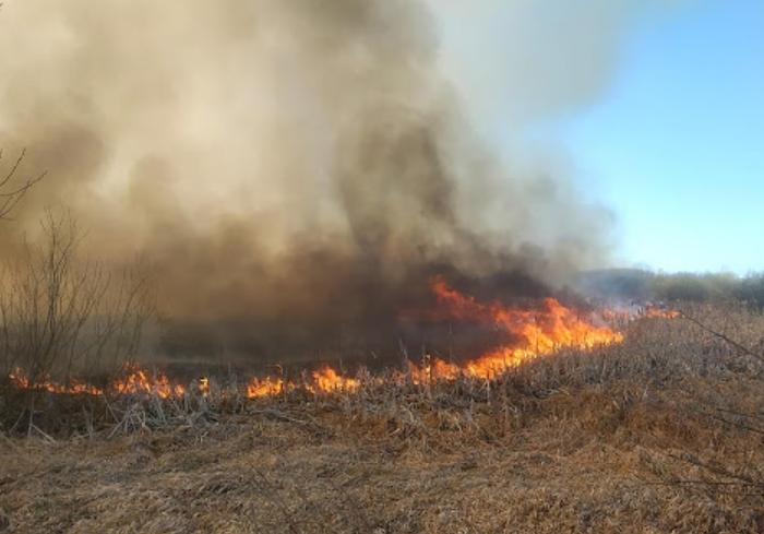 За сутки в Харькове сгорело 40 гектаров природных экосистем